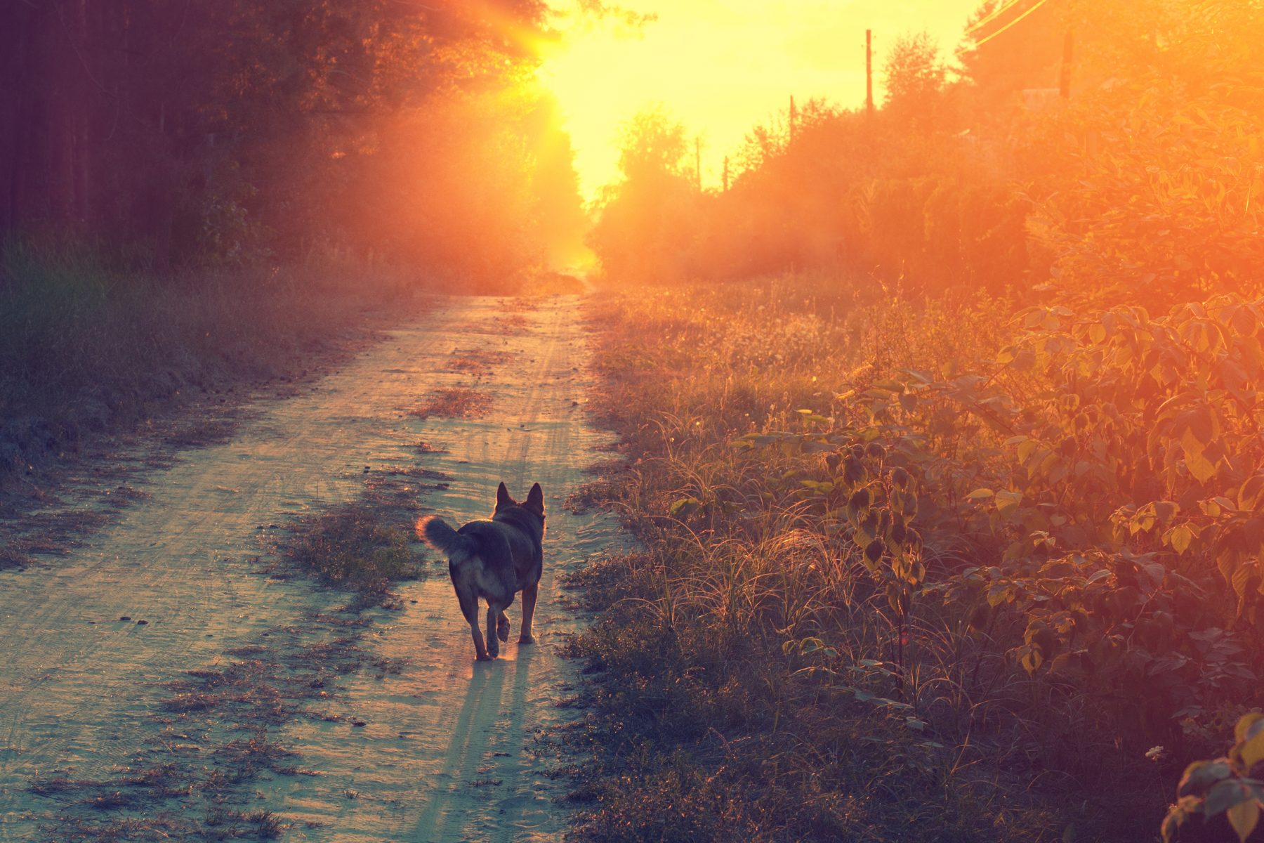 Dog walking off to start the day. No worries, no doubts. We should all be more like dogs. :)