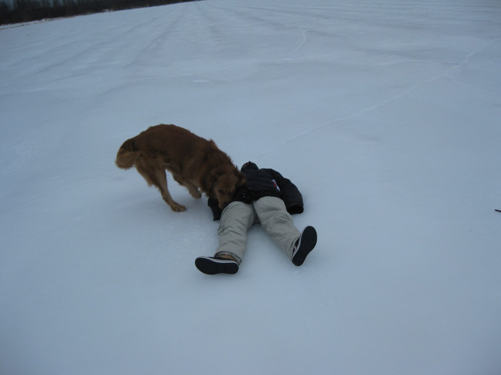Ice is not safe. Here's woman down as rescue dog searches pockets for provisions.