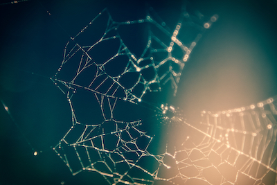 Spiderweb close-up